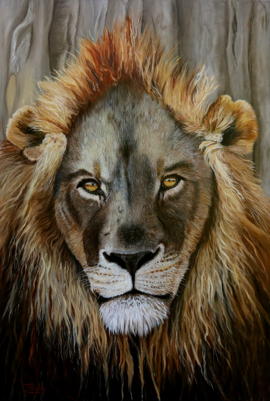 Africa Lion - Oil Painting by Jan Priddy, Wildlife Artist