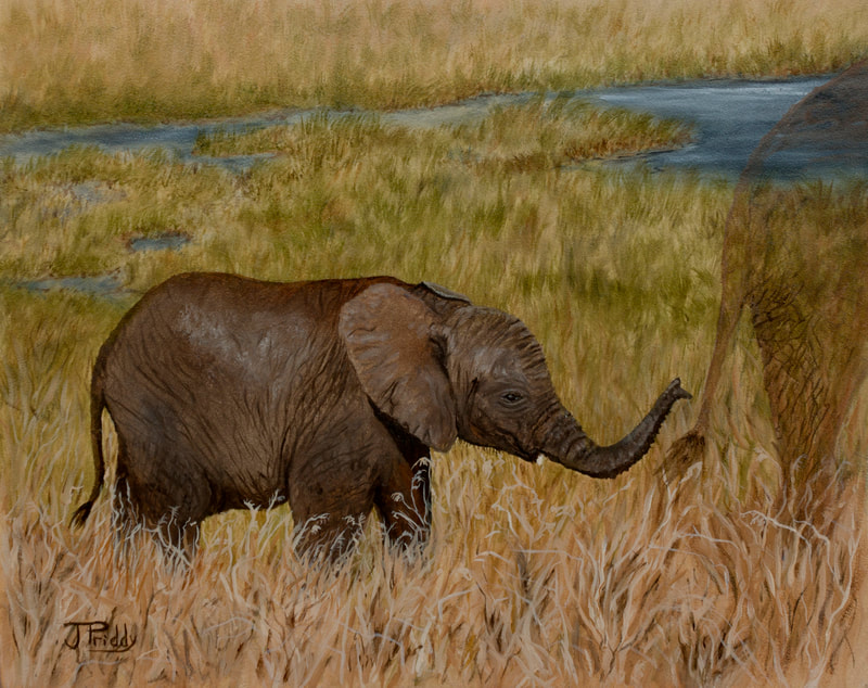 African Elephant, by Jan Priddy, Wildlife Artist. Oil Painting