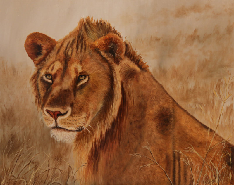 African Lion, Oil Painting by Jan Priddy