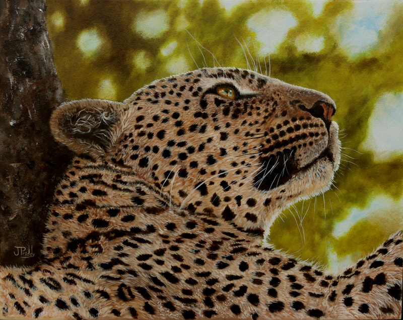 Leopard from Africa, Oil Painting by Jan Priddy